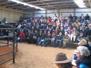Murray grey sale day