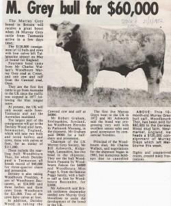 thor the bull