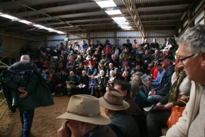 Crowds at the Woodbourn 2013 Murray Grey sale